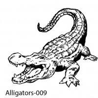 alligator-09