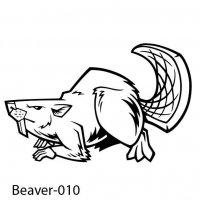 beaver-10